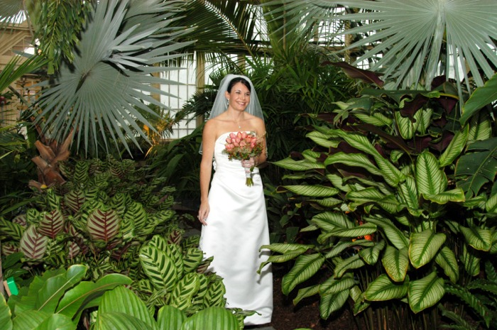 David Clow Conservatory Bride