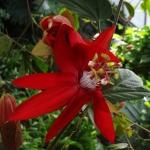 passion-flower-1-half